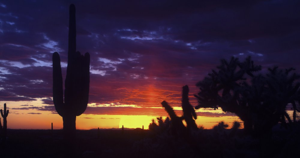 Arizona Sunset w Saguaro and Cholla cactus.jpg