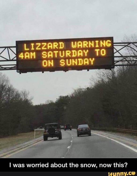 lizzard warning.jpg