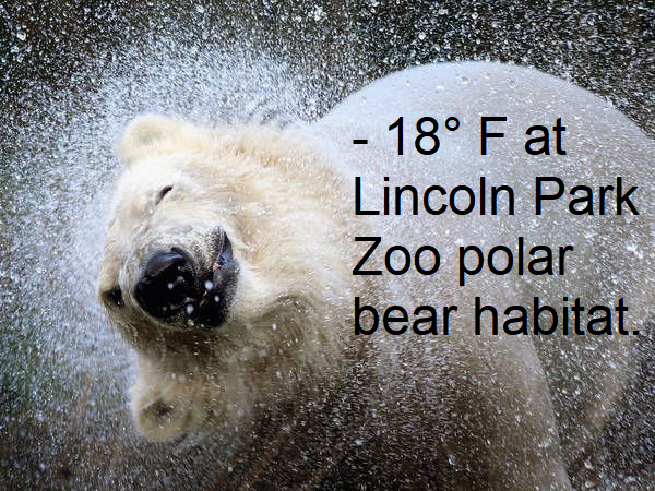 Temperature at Lincoln Park Zoo.png