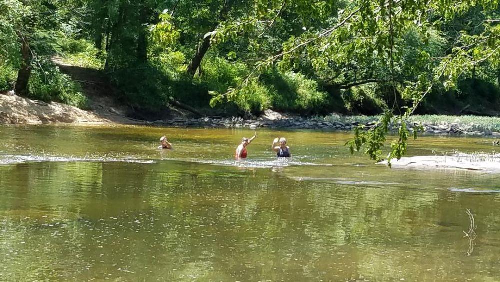 swan bridge swimming.jpg