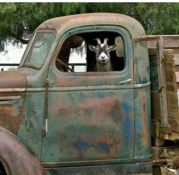 flatbed ford n goat.png