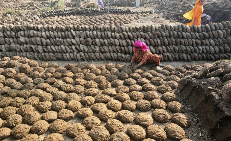 cow-dung-patties-sales-in-India2.jpg