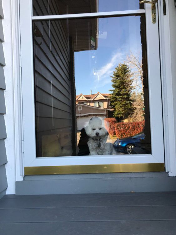 Guard Dog.jpg
