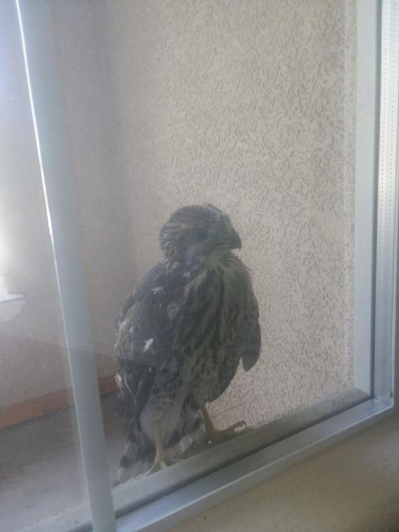 Q-bird.thumb.jpg.d5278943379360a7ebd612aa488e4760.jpg