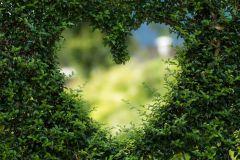 heart-1192662_1280.jpg